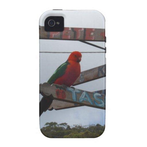Lorikeet iPhone 4/4S Covers