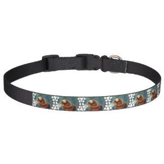 Lorikeet Pet Collars