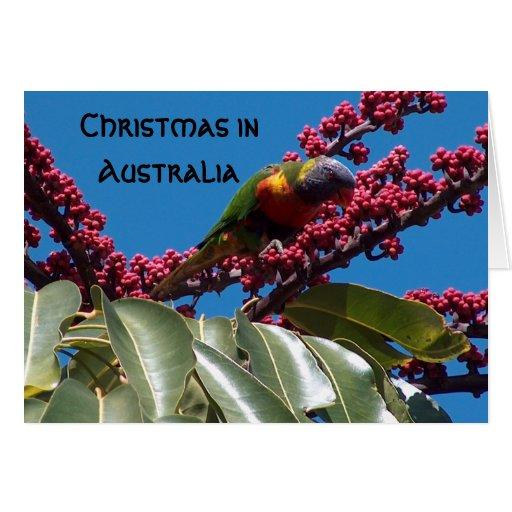 Lorikeet Feeding, Christmas in, Australia Greeting Cards
