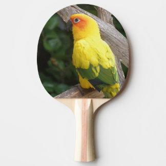 Lorikeet Ping-Pong Paddle
