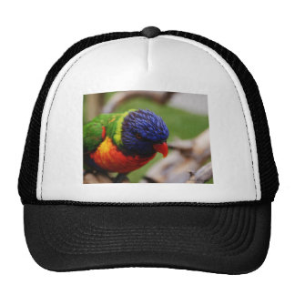 Lorikeet Mesh Hat