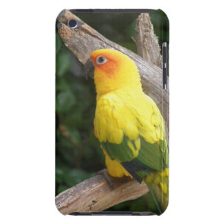 Lorikeet  iTouch Case iPod Touch Covers