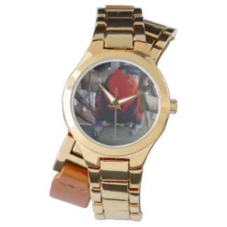 Lorikeet,_Rainbow,_Ladies_Gold_Wrap_Watch. Watches