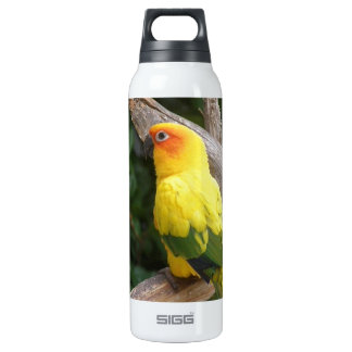 Lorikeet 16 Oz Insulated SIGG Thermos Water Bottle