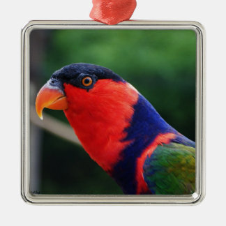 Lorikeet Silver-Colored Square Decoration