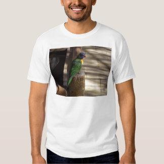 Lorikeet T Shirts