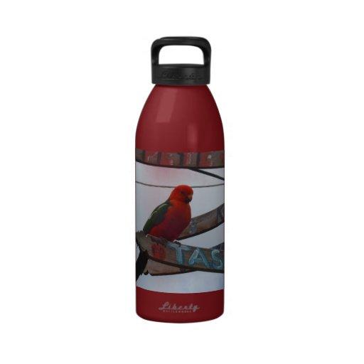 Lorikeet Drinking Bottle