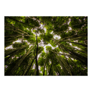 Lost In The Bamboo Poster
