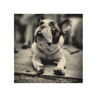 Lost In The Crowd -  A Lil' French Bulldog Waits Wood Wall Art