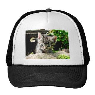 Lost Kitten Cap