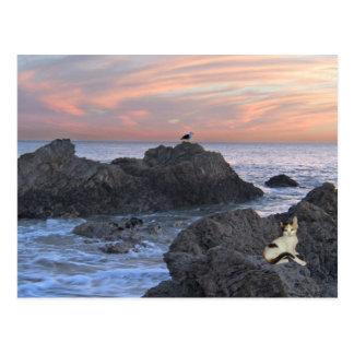 Lost Kitten Postcards