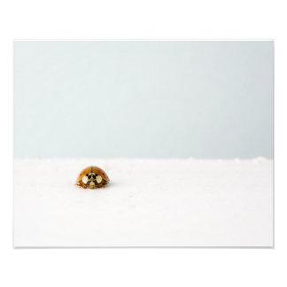 Lost ladybug photographic print