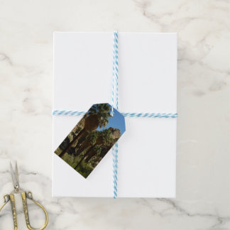 Lost Palms Oasis I at Joshua Tree National Park Gift Tags