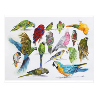 Lots and lots of Parrots on lots and lots of gifts Postcard