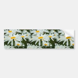 lotsa daisies bumper sticker