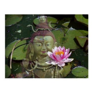 Lotus 1 Buddha Postcards