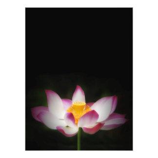 lotus_7751V jpg Photographic Print