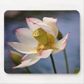 Lotus Blossom in Wind Mouse Pad