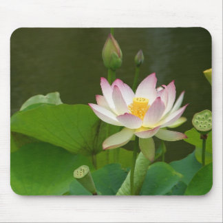 Lotus Blossom Mouse Mat