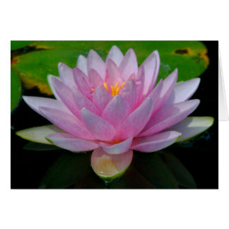 LOTUS BLOSSOM/PINK/BEAUTIFULLY-SHAPED/PHOTOG. NOTE CARD