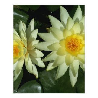 Lotus Flower 11.5 Cm X 14 Cm Flyer