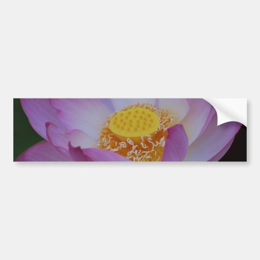 Lotus flower and its meaning bumper sticker