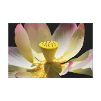 Lotus flower and its meaning stretched canvas print