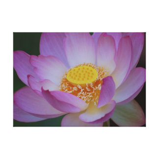Lotus flower and its meaning stretched canvas prints
