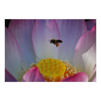 Lotus flower and its meaning posters