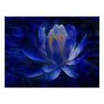 Lotus flower and its meaning print