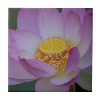 Lotus flower and its meaning ceramic tile