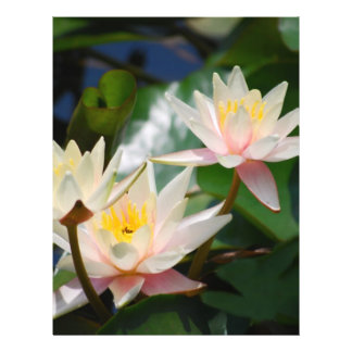 Lotus flower and meaning full color flyer