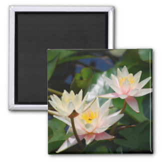 Lotus flower and meaning magnet