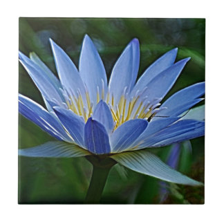 Lotus flower and meaning small square tile