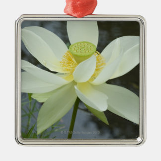 Lotus flower at edge of pond Florida Christmas Ornament