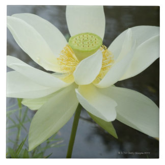 Lotus flower at edge of pond Florida Large Square Tile