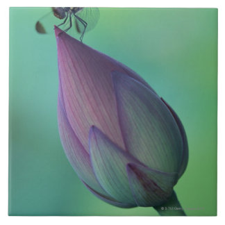 Lotus flower bud and a dragonfly large square tile