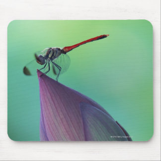 Lotus flower bud and a dragonfly mouse mat