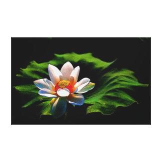 Lotus flower canvas print