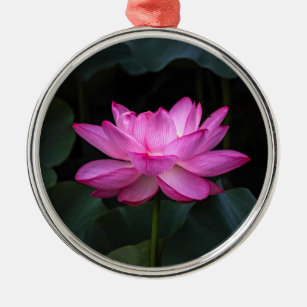 Japanese Lotus Flower Gifts Home Furnishings Accessories Zazzle