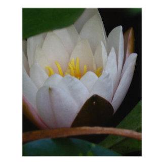 Lotus Flower Flyer Design