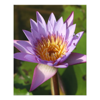 Lotus Flower Personalized Flyer