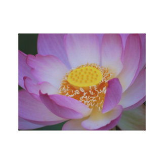 Lotus flower for Mother's Day Gallery Wrap Canvas