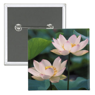 Lotus flower in blossom, China 15 Cm Square Badge