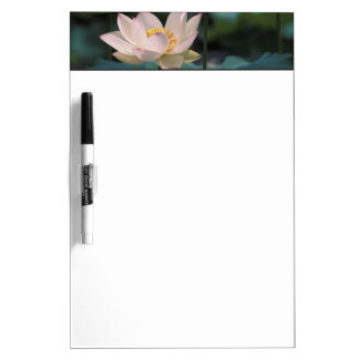 Lotus flower in blossom, China Dry Erase Board