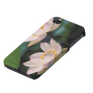 Lotus flower in blossom, China iPhone 4 Covers