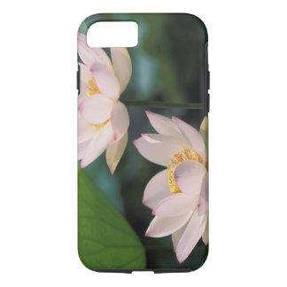 Lotus flower in blossom, China iPhone 7 Case
