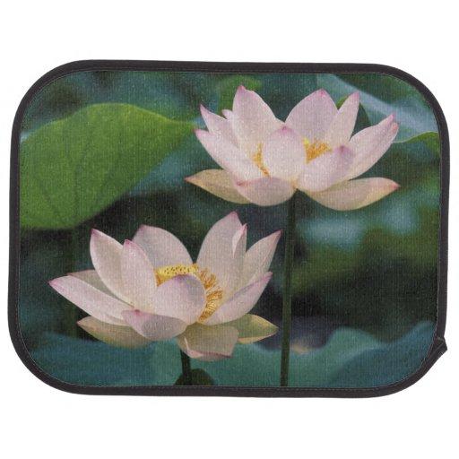 Lotus flower in blossom, China Floor Mat