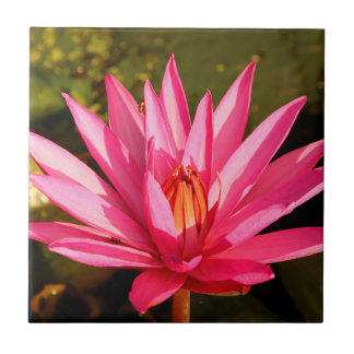 Lotus Flower in the Nature Small Square Tile