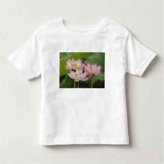 Lotus flower, Nelumbo nucifera, China 2 Toddler T-Shirt
